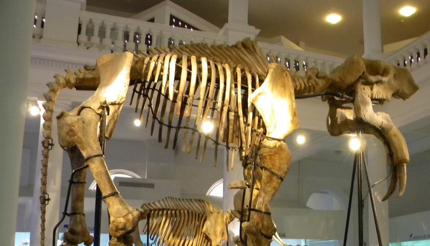 Premieră în lumea muzeală din Europa: Muzeul Antipa, primul beneficiar al uneia dintre cele mai inovatoare tehnologii japoneze anticutremur